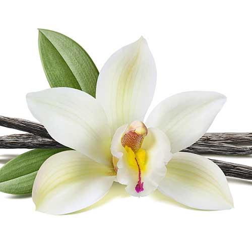 Shake saveur vanille FiguActive : vanille