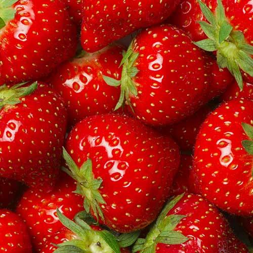 Shakes saveur fraise banane FiguActive : fraise