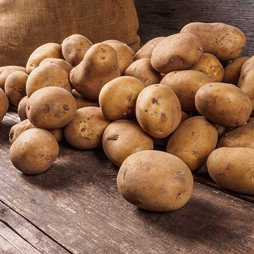 Soupes de Pommes de terre - Auberge FiguActive : pommes de terre