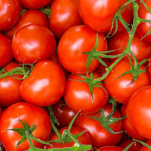 """Soupe de tomates """"mediterranée"""" FiguActive : tomates"""